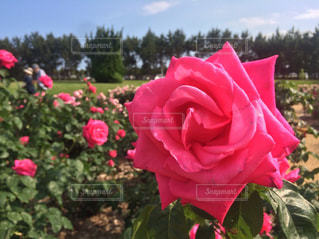 植物にピンクの花 - No.872347