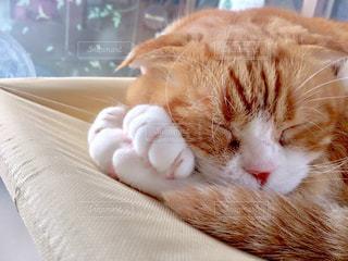 ベッドの上で横になっているオレンジと白猫の写真・画像素材[991136]