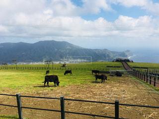 山の上に立っている牛の群れ - No.1115808