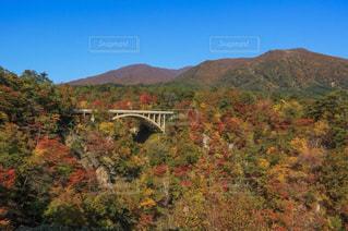 近くに木々 や背景の山と丘の中腹のアップ - No.1115916