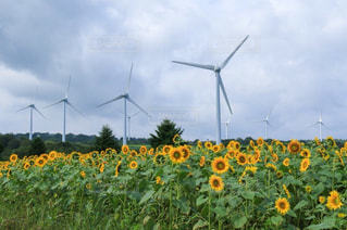 草の覆われたフィールド上に風車の写真・画像素材[1115917]