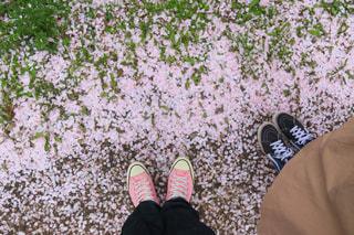 桜道の写真・画像素材[1118801]