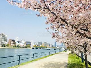 川と桜の写真・画像素材[1124150]