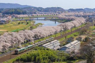 白石の千本桜の写真・画像素材[1124169]