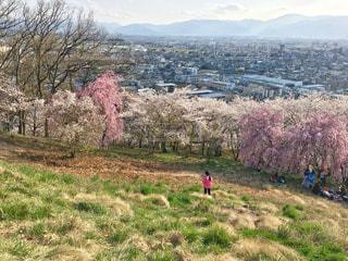 弘法山からみる街の写真・画像素材[1125160]