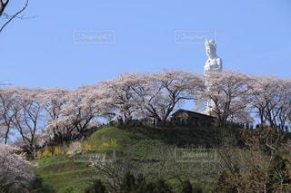 観音様と桜 - No.1125166
