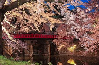 弘前城の写真・画像素材[1125202]