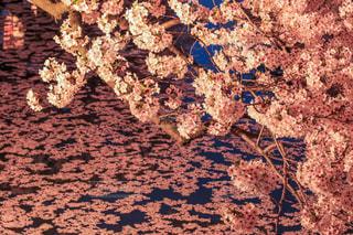 弘前城の写真・画像素材[1125204]