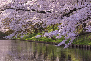 弘前城の写真・画像素材[1125214]