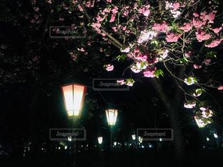 暗闇の中のツリーの写真・画像素材[1130520]