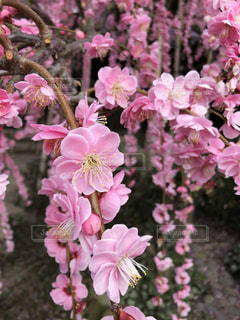 近くの植物にピンクの花のアップの写真・画像素材[1810896]