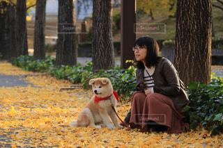 紅葉,黄色,イチョウ,愛犬