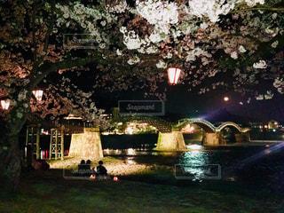 桜,花見,夜桜,錦帯橋