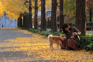秋の日の写真・画像素材[2013258]