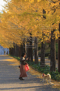 お散歩の写真・画像素材[2013260]