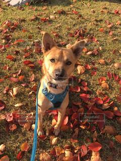 秋のある日のお散歩の写真・画像素材[2013312]