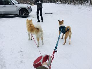 雪の写真・画像素材[2013380]