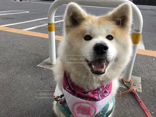 道路の脇に座っている犬の写真・画像素材[2950497]