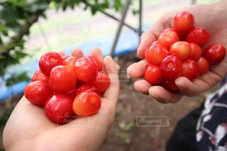 赤,かわいい,さくらんぼ,可愛い,美味,さくらんぼ狩り,EOSM10
