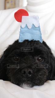 ベッドの上で横になっている茶色と黒犬の写真・画像素材[1004132]