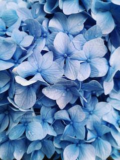 近くの花のアップの写真・画像素材[1312859]