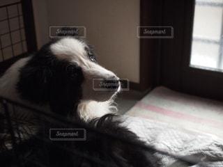 ベッドの上に横たわる犬 - No.973680