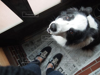 カメラを見て犬 - No.973684