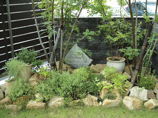 クローズ アップ庭園のの写真・画像素材[1158623]