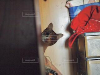 ドアの上に座っている猫の写真・画像素材[1260918]