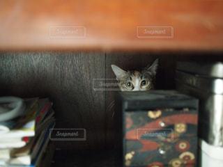 ノート パソコンの上に座っている猫の写真・画像素材[1260919]