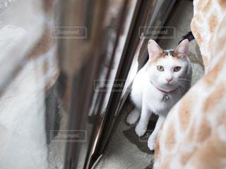 近くに猫のアップの写真・画像素材[1260920]