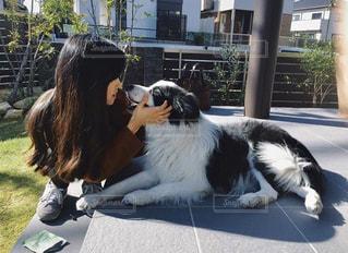 犬,愛犬,ボーダーコリー,私
