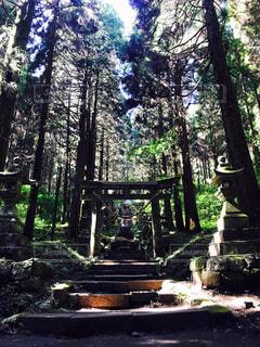 神社,熊本,神秘的,上色見熊野座神社