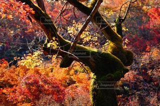 木の花の花瓶の写真・画像素材[1665542]
