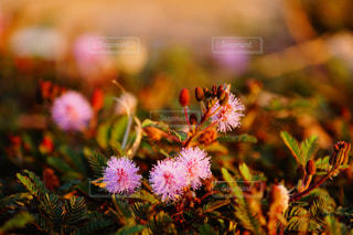花の写真・画像素材[1885416]