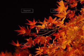 近くの花のアップの写真・画像素材[869830]