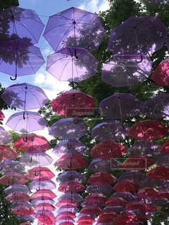 大きな紫色の傘の写真・画像素材[2225192]