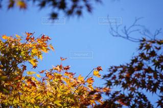 木の上を飛んでいる鳥の写真・画像素材[890608]
