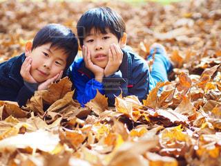 落ち葉のじゅうたんと兄弟の写真・画像素材[816601]