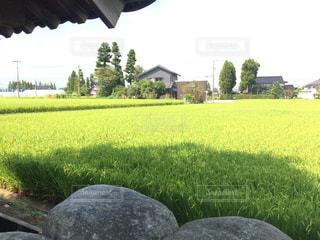 家の前の田んぼの写真・画像素材[1399622]