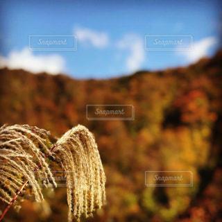 自然,風景,空,秋,紅葉,屋外,山,樹木,渓谷,新潟県,11月,モミジ,峡谷,胎内市,奥胎内