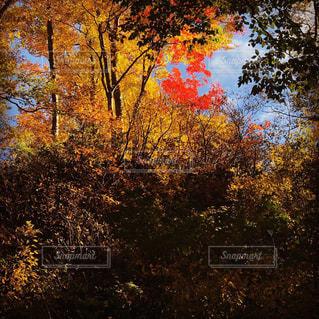 自然,風景,空,秋,紅葉,森林,屋外,山,樹木,渓谷,新潟県,草木,11月,ガーデン,カエデ,モミジ,峡谷,胎内市,奥胎内