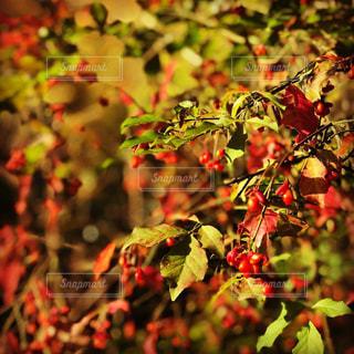 近くの木のアップの写真・画像素材[1599376]