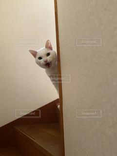 猫,動物,階段,室内,ねこ,ペット,人物,ひょっこり,にゃー,ネコ