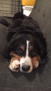 地面に横たわっている茶色と黒犬 - No.977351