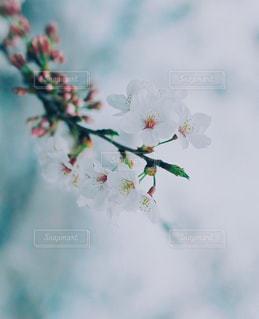春の写真・画像素材[409801]