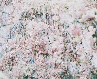春 - No.409803