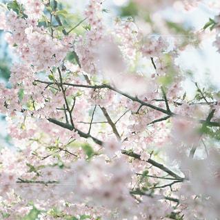 春 - No.409805