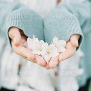 春の写真・画像素材[409806]