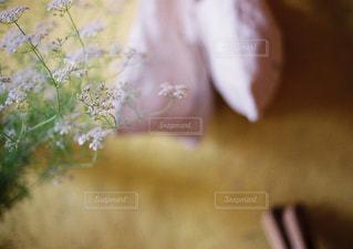 近くの植物のアップ - No.728891